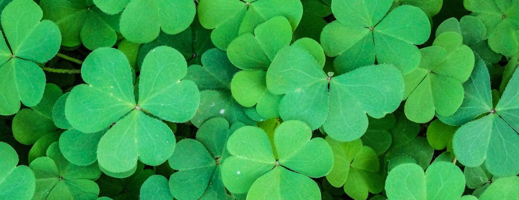 picture of clovers